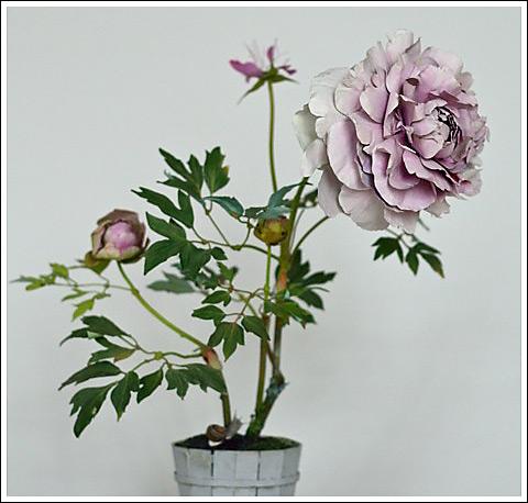 Pink Peony - Carmen Almon