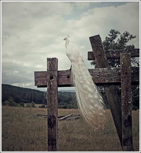 photo Christian Fuchs