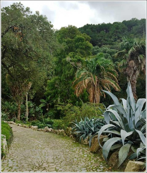 Enchanted gardens at Quinta de Monserrate